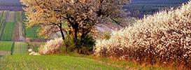 Krajobrazy wiosenne