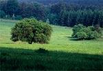 Wiosenne Dahany - Roztocze Wschodnie / Południowe