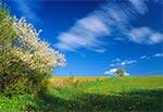 Polana w Roztoczańskim Parku Narodowym - Biały Słup