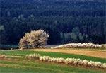 Pola Obroczy i lasy Roztoczańskiego Parku Narodowego