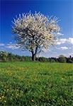 Wiosna w Roztoczańskim Parku Narodowym - Biały Słup