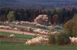 Wiosna na Roztoczu - pola Obroczy