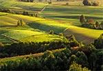 Pola okolic Kol. Gorajec-Zagroble
