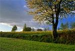 Tarasowe (terasowe) pola Roztocza Zachodniego