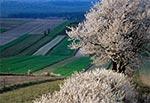 Wiosenne pola Obroczy