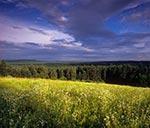 Widok z Bukowej Góry na lasy RPN