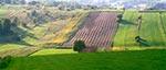Wiosna na Roztoczu Szczebrzeszyńskim. Taki piękny widok znajduje się niedaleko drogi przez Szperówkę do Gorajca, tuż za Szczebrzeszynem
