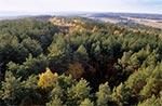 Lasy Roztocza Wschodniego / Południowego - widziane z lotu ptaka