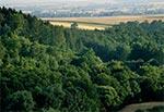 Lasy Działów Grabowieckich