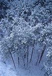 Zimowy las na Górze Brusno widziany z lotu ptaka