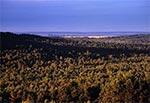 Lasy Roztocza Środkowego