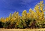 Zmierzwione wiatrem drzewa na Działach Grabowieckich