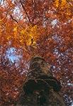 Bukowy Las koło Narola