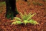 Jesienny las - rejon Szewni