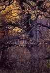 Listopad w kniei Roztoczańskiego Parku Narodowego