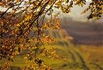 Na skraju Roztoczańskiego Parku Narodowego - Kosobudy