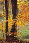 Lasy na południe od Szewni