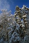 Pod Bukową Górą - przy drodze ze Zwierzyńca do Soch