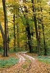 Roztoczański Park Narodowy w okolicy wsi Wojda