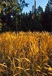Śródleśna polanka - okolice Florianki