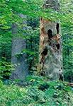 Rez. Bukowa Góra - Roztoczański Park Narodowy