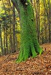 Krasnobrodzki Park Krajobrazowy - rez. św. Roch