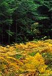 Krasnobrodzki Park Krajobrazowy - okolice Wólki Husinieckiej