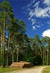 Puszcza Solska - wnętrze lasów