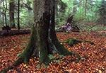 Rezerwat Bukowa Góra w Roztoczańskim Parku Narodowym