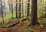 Roztoczański Park Narodowy w okolicy Szewni Dolnej