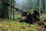 Lasy w dolinie potoku Świerszcz