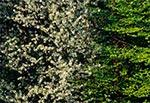 Ściana zagajnika wiosną - okolice Bliżowa i Wojdy