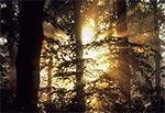 RPN o świcie