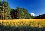 Śródleśna, podmokła polana w Roztoczańskim Parku Narodowym