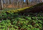 Rezerwat Jarugi wiosną