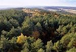 Widok na lasy Góry Brusno z lotu ptaka