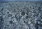 Zimowy las z lotu ptaka - Góra Brusno