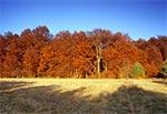 Rezerwat Las Bukowy koło Narola