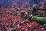 Bukowa Góra w listopadzie