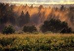Widok na lasy Roztoczańskiego Parku Narodowego z wierzchowiny nad Obroczą
