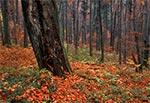 Jesień w Roztoczańskim Parku Narodowym