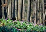 Wiosna w Roztoczańskim Parku Narodowym