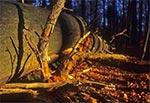W rezerwacie Bukowa Góra