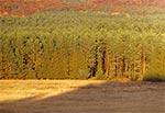 Lasy Dahanów