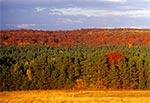 Dahany jesienią