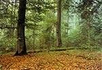 W rezerwacie Bukowa Góra - Roztoczański Park Narodowy