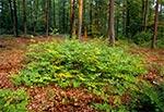 Lasy Kosobudzkie
