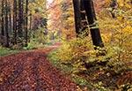 Leśny dukt jesienią
