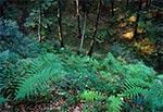 Lasy Roztocza Zachodniego