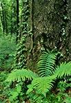 Leśny zakątek w pełni lata. Kiedyś można było przemierzać latem leśne gęstwiny bez obaw, a obecnie niemal każda taka wizyta kończy się spotkaniem z kilkoma kleszczami